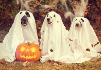 Planes de última hora para Halloween en casa